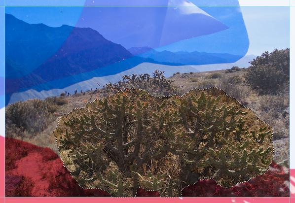 cactus_photoshop.png