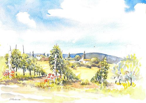 Vineyard near Castelfiorentino, 2008