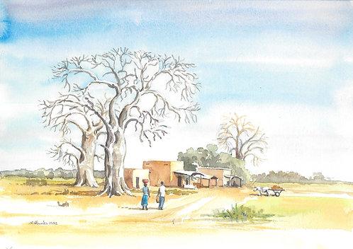Baobab trees near San, 1992
