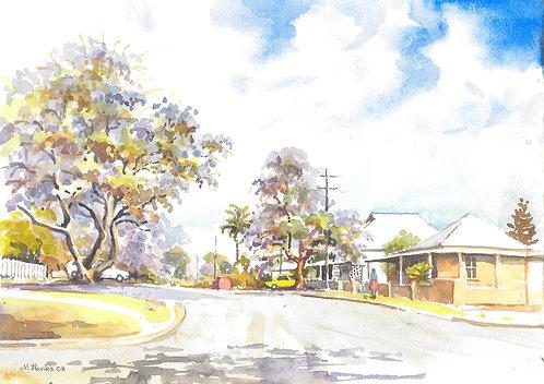 Jacaranda trees in Bellingham