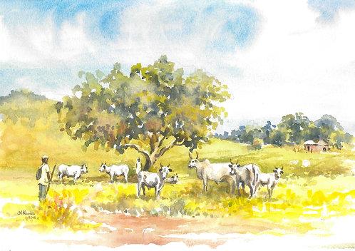 Cattle in hills near Okpwa, 2016