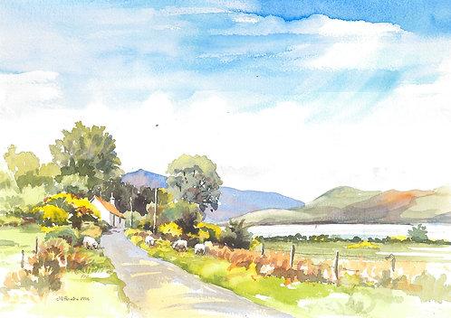 Country lane near Tighnabruaich, Argyll