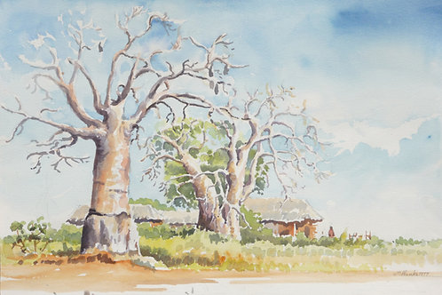 Baobab trees near Malindi, southeastern Kenya, 1977