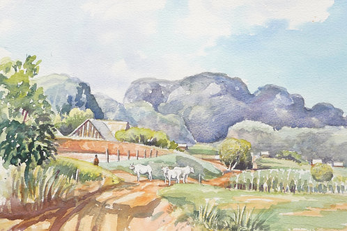 The National Park, Viñales, 1997