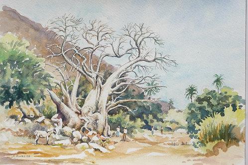 Baobab tree in Cida De, Santiago Island, 2008