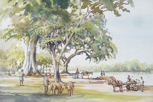 Banks of Rio Magdalena, Mompox, 2014