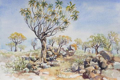 Quiver Tree Forest near Keetmanshoop, 2005