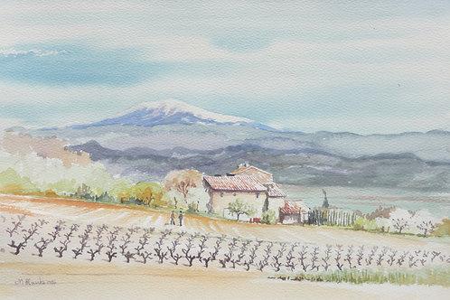 Winter Vineyard, Provence, 1989