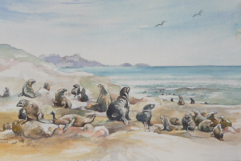 Seal Reserve on Skeleton Coast, 2005