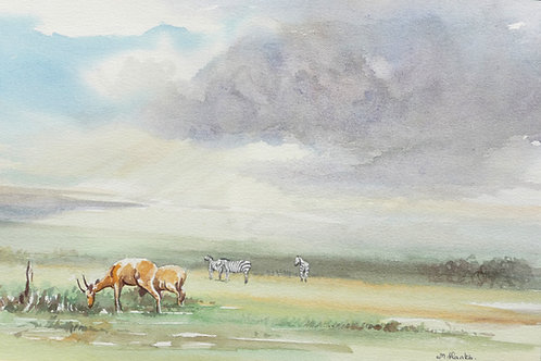Masai Mara National Reserve (B), 1977