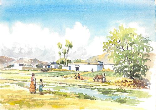 Farm near Shigatse, 1988