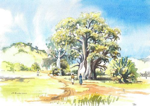Baobab trees on Likoma Island, 2000