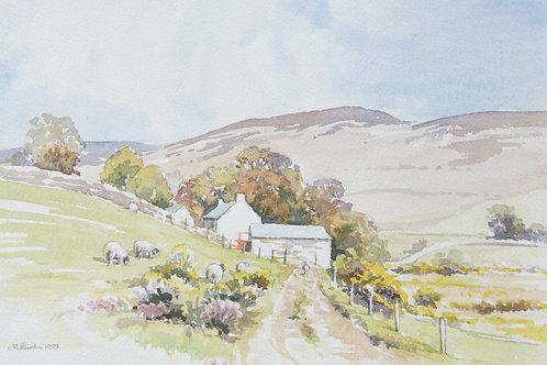 Dartmoor Farm, Bellever, 1999