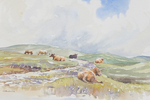Highland Cattle, Isle of Rum, 1996