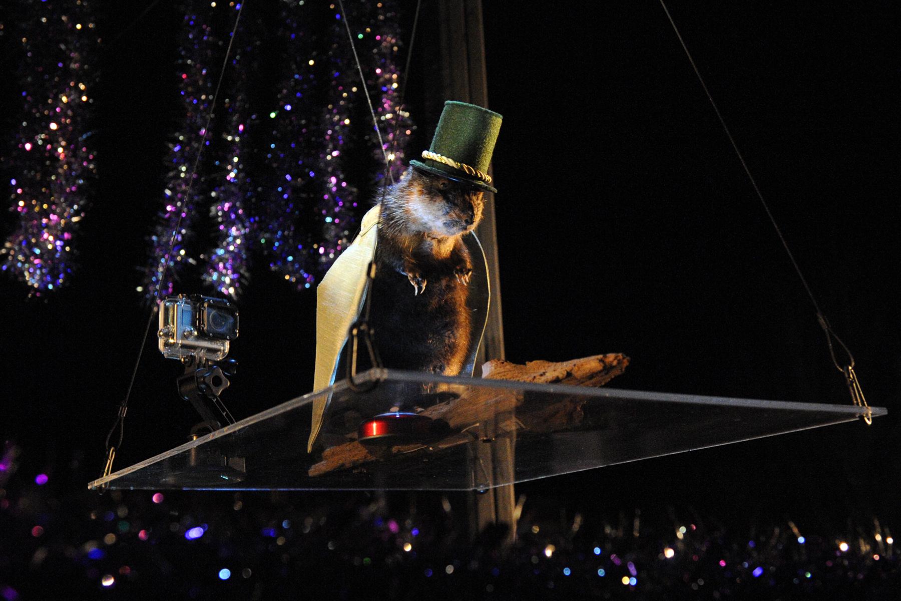 Marshall Muskrat on New Year's Eve