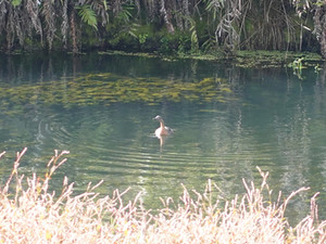 Rangitane Stream Restoration