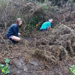 Wairoa Stream: 3rd year of planting by Kerikeri Primary School