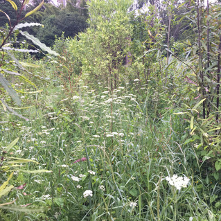 Wairoa Stream Projects: 'Springing into weed control mode'