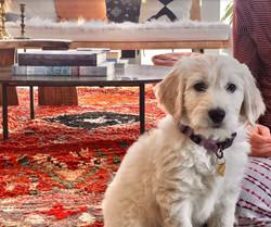Murphy (Orange - Orange Collar)