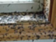 swarmers.jpg