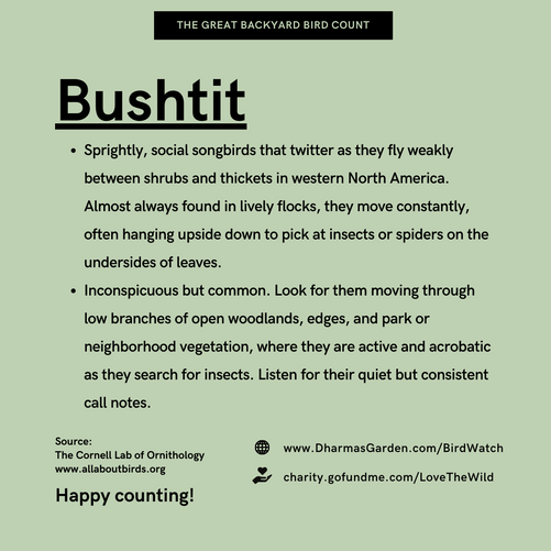 Bushtit Info
