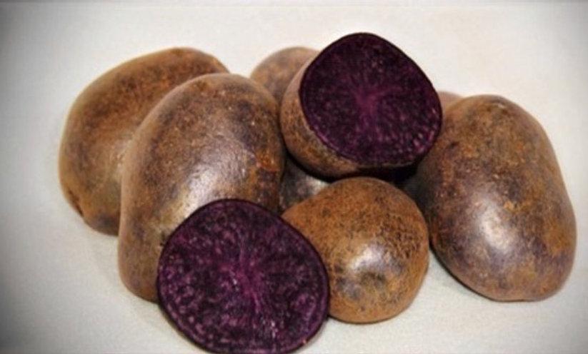 Seed Potato - Purple Majesty