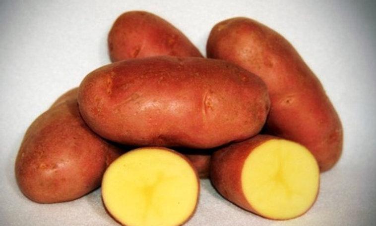 Seed Potato - Asterix