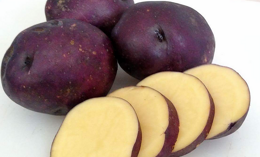 Seed Potato - Harvest Moon