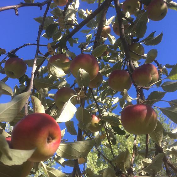 Fruit Trees: Thinning Fruit