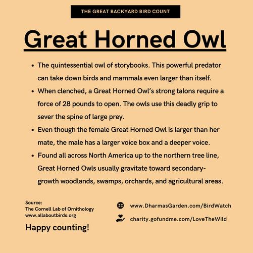 Great Horned Owl Info