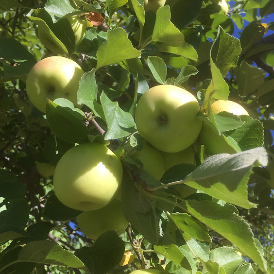 Fruit Trees: Fruiting and Flowering