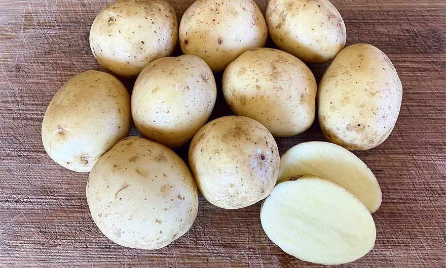 Seed Potato - Golden Globe