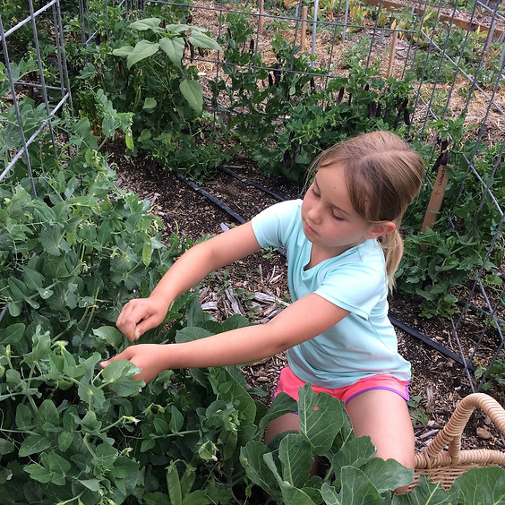 Farmer For A Day 9am-1pm, July 26