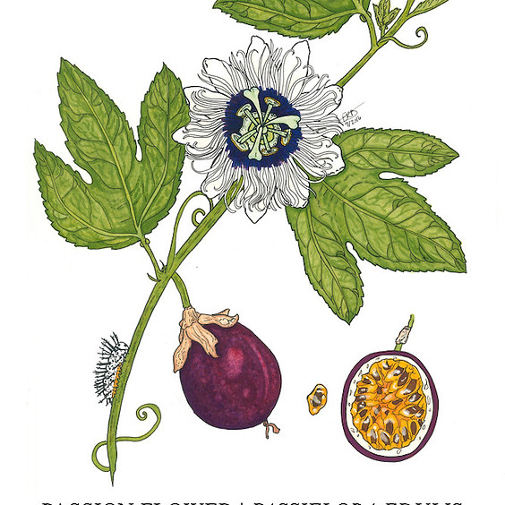 Dine & Draw - Intro to Botanical Drawings