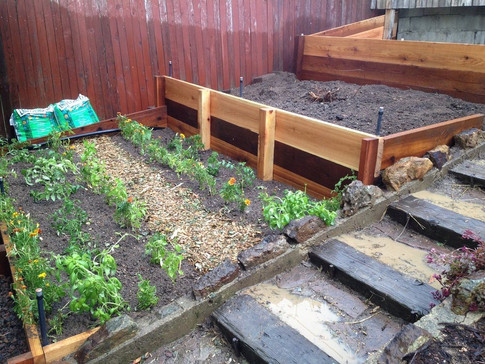 Terraced Raised Beds.jpg