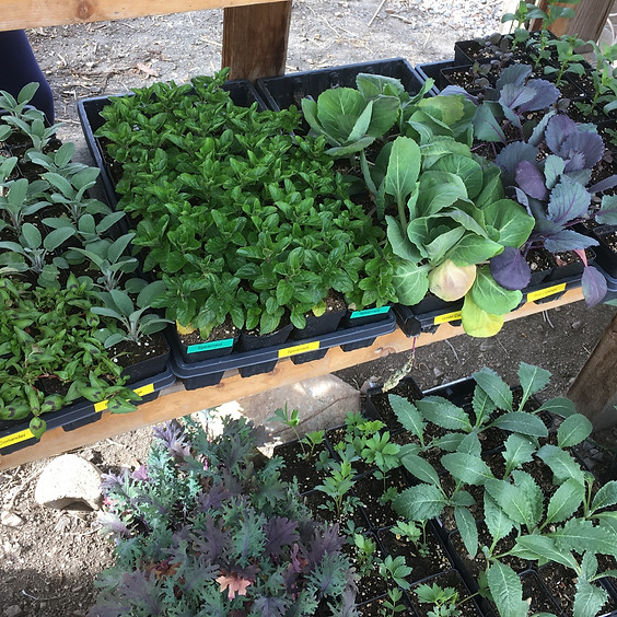 Seedling Sale (self-serve), May 16 & 17th, 9am to 5pm Saturday & Sunday