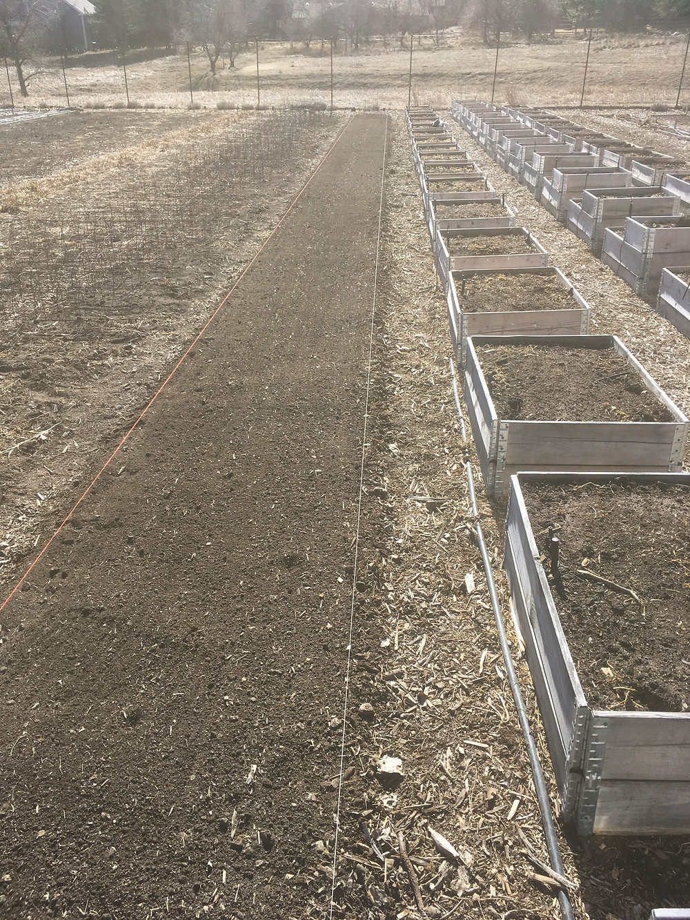 freshly planted rows