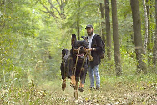 Woufi-in-dog-we-trust-comportement-educa