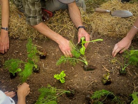 Solutions locales #2 : Bâtir du durable en convivialité