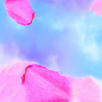 Magenta Flower Petals