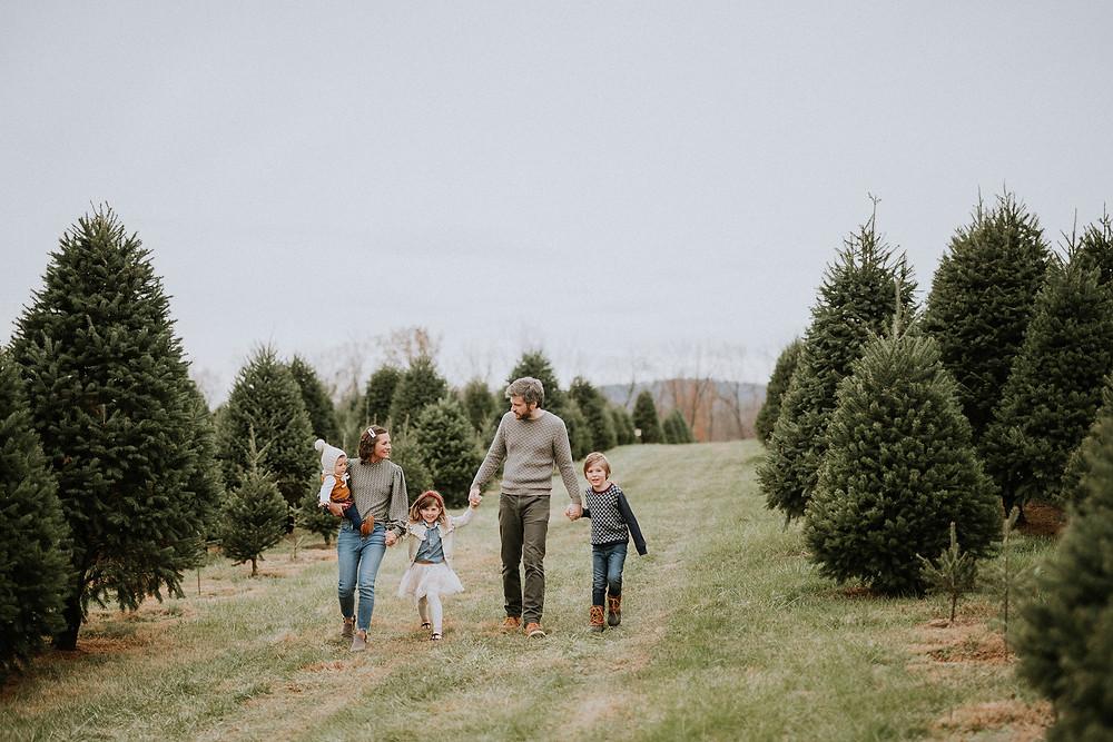 Christmas tree farm minis DC