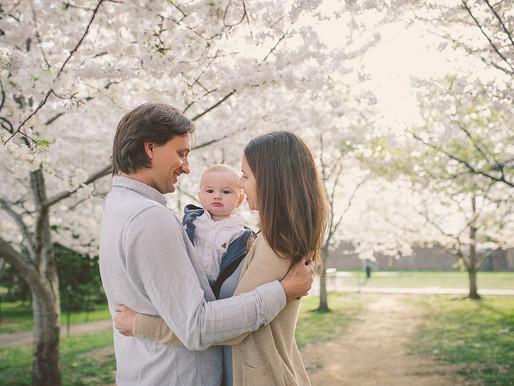 Cherry Blossom DC Family session