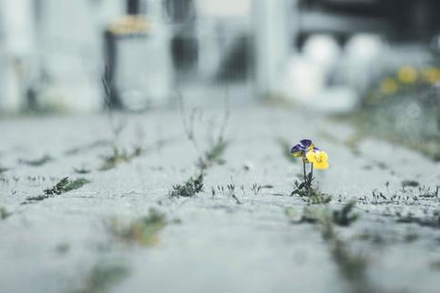 07.04 Piccole speranze