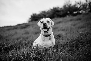 white dog on green grass field_edited.jpg