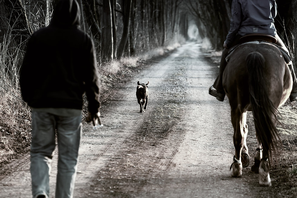 dog walking on pathway between two perso