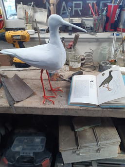 Started as a Curlew