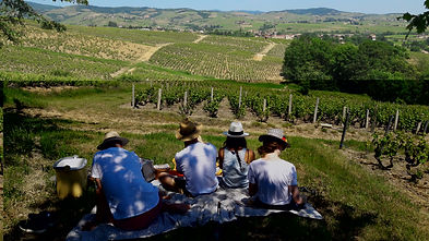 Wine Liaisons Vineyard tours and picnics