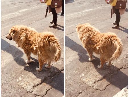 Den smarta hunden i Aten!