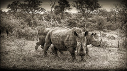 Rhino threat
