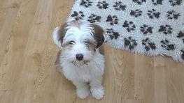 Puppy Thalia.jpg
